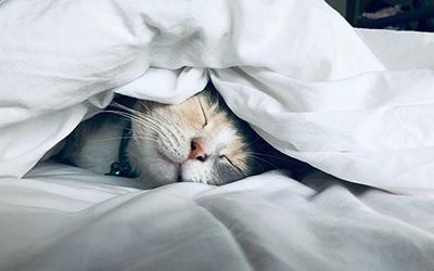 睡眠の質を上げる効果的な3つの方法