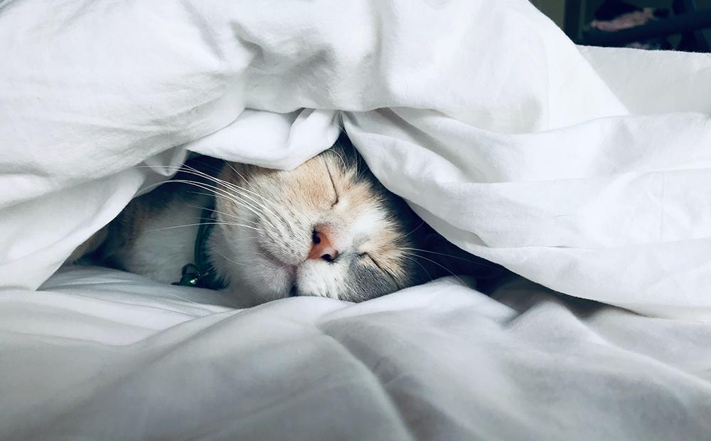 質 睡眠 上げる の を